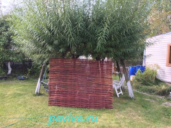 плетёная изгородь в спб