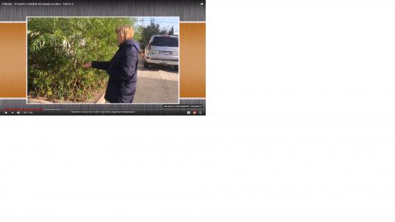 живая изгородь из черенков ивы фото и видео