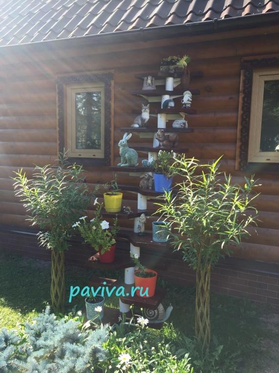 Цены на растения для сада из ивы