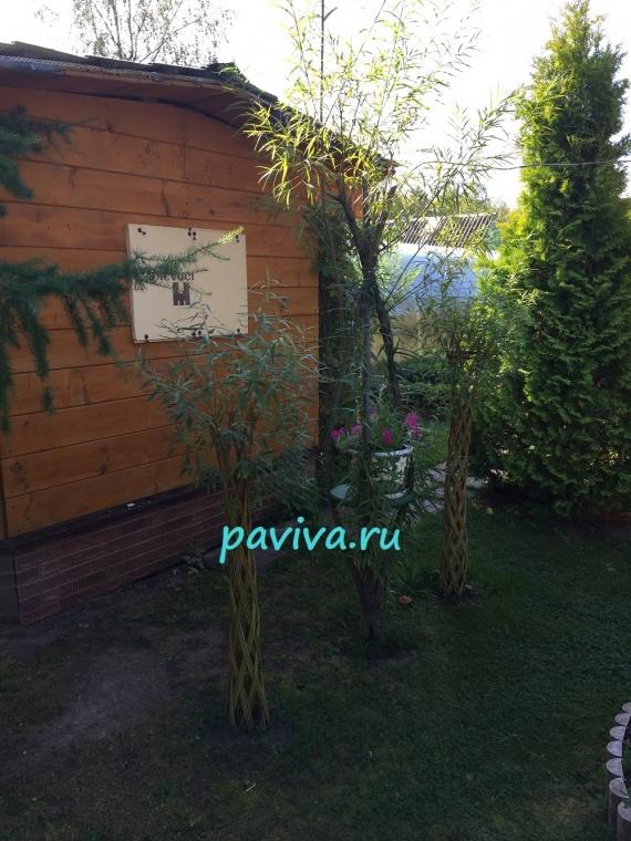 Укладка сада живыми конструкциями из ивы