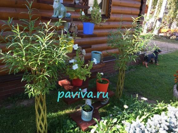 дизайн сада растениями в спб и лен.области
