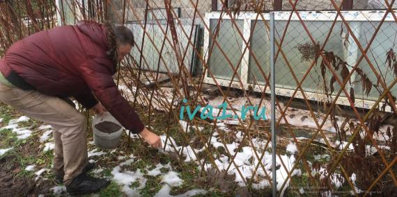 Удобрение для сада из ивы
