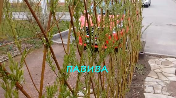 интернет магазин удобрений для сада огорода