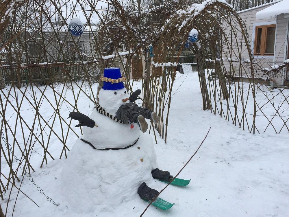 Живой забор из ивы зимой