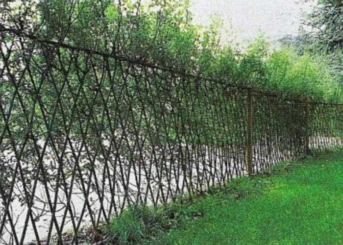 Живой забор из ивы своими руками
